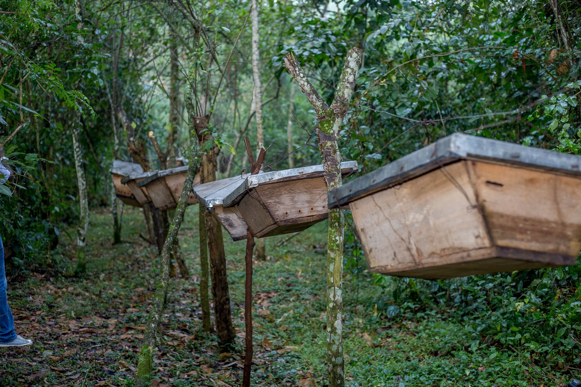 In Kamwenge, a Bee Keeping Project is Curbing Human-Wildlife