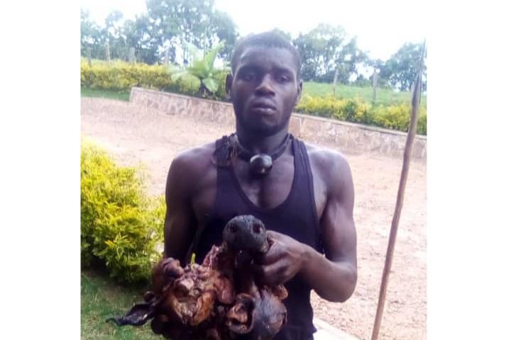 Uganda: Four men arrested for killing beloved gorilla
